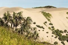 Piasek diun park narodowy zdjęcie royalty free