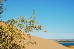Piasek diuna na sposobie Punta Loma zdjęcia royalty free