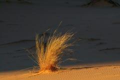 Piasek diuna z trawą Fotografia Stock