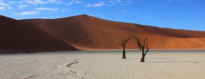 Piasek diuny i nieżywi drzewa przy Deadvlei Namibia zdjęcie stock