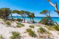 Piasek diuny w Maria Pia plaży zdjęcia stock