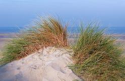 Piasek diuny w Picardy wybrzeżu Obrazy Stock