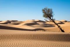 Piasek diuny w pustyni Sahara Fotografia Royalty Free