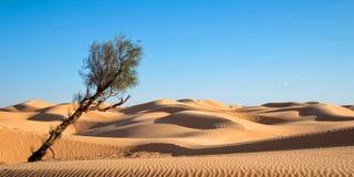 Piasek diuny w pustyni Sahara południe Tunezja Zdjęcie Royalty Free