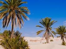 Piasek diuny w saharze blisko Douz Tunezja Afryka Fotografia Stock