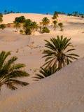 Piasek diuny w saharze blisko Douz Tunezja Afryka Zdjęcia Stock