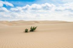 Piasek diuny w Viana pustyni przylądek - Deserto de Viana w Boavista - obrazy stock