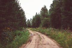 Piasek droga w drewnach na letnim dniu Obrazy Royalty Free