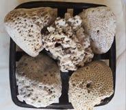 Piasek na wybrzeżu uzupełnia skorupy i ziemi koral który robi mu wygodny, biały i czysty, obraz royalty free
