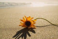 Piasek pla?a i Osamotniony kwiat przy zmierzchem zdjęcia royalty free