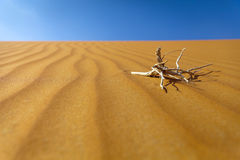 Piasek pustynia Obrazy Stock
