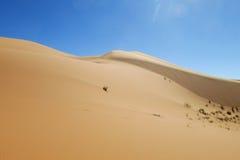 Piasek pustynna diuna w Sahara Zdjęcia Royalty Free
