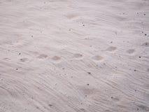 Piasek tekstura z foorprint zwierzę Zdjęcia Stock