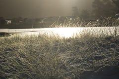 Piasek trawy przy Pakiri plaży Northland Nowa Zelandia i diuny Zdjęcia Royalty Free