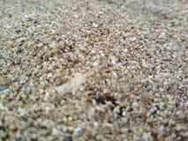 Piasek w plaży zdjęcia royalty free