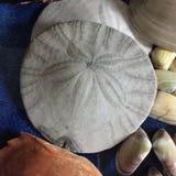 Piasków dolary i Seashells obraz stock