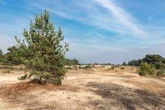 Piasków dryfy z drzewami przy Holenderskim parkiem narodowym Veluwe obrazy stock