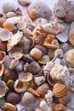 piasków seashells obrazy royalty free