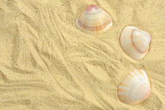 piasków seashells Obraz Royalty Free