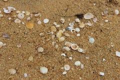 piasków seashells Fotografia Royalty Free