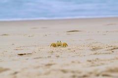 Piaska krab Zdjęcie Royalty Free