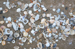 piaska morza skorupy tła piłki plaży piękna pusta lato siatkówka Zdjęcia Royalty Free