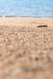 Piaska morze makro- Zdjęcia Royalty Free
