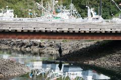 Piaska punktu Alaska łososia derby Zdjęcia Royalty Free