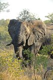 piaski sabie słonia Zdjęcie Stock