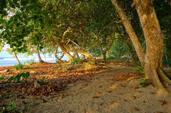 Piaskowata ścieżka pod drzewami wzdłuż tropikalnego wybrzeża Obraz Stock