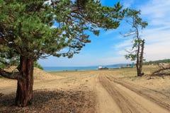 Piaskowata droga denny i osamotniony stary drzewo zdjęcie stock
