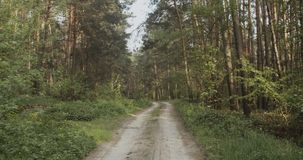 piaskowata lasowa droga zbiory