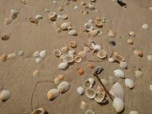 Piaskowata plaża z biel skorupami w Phuket zdjęcia royalty free
