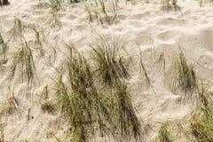 Piaskowata plaża Z traw świrzepami Obraz Royalty Free