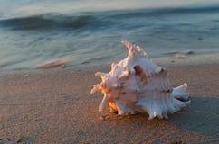 piaskowata plażowa denna łupiny Fotografia Stock