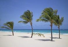 piaskowaty plażowy ocean Obraz Stock