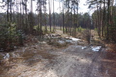 Piaskowaty sposób przez lasu Zdjęcie Stock