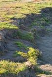Piaskowaty trawiasty brzeg jezioro Zdjęcie Royalty Free