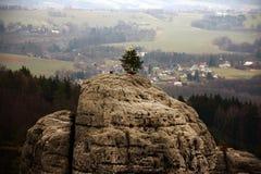 Piaskowcowe falezy w Artystycznym raju z Cristmass drzewem zdjęcia stock