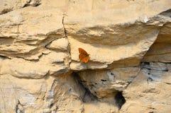 piaskowiec Góry Pomarańczowy motyli siedzący puszek odpoczywać Obraz Stock
