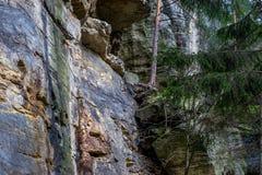 Piaskowiec skały w lesie Obrazy Royalty Free