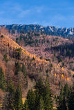 Piatra Craiului山在秋天 免版税库存图片