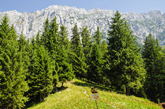 Piatra Craiului. View of Piatra Craiului montain from the valley royalty free stock images