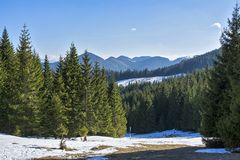 Piatra Craiului mountains. Hiking on the road from Zarnesti to the Piatra Craiului mountains, in Romania stock images