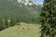 Piatra Craiului Mountains Stock Photography