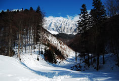 Piatra Craiului, in winter. Landscape view of Piatra Craiului Mountains,from Romania stock images