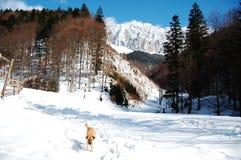 Piatra Craiului, in winter Stock Images