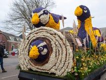 Piattaforma con i tulipani ed i giacinti durante la parata tradizionale Bloemencorso dei fiori da Noordwijk ad Haarlem nel Nether Fotografia Stock Libera da Diritti