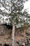 Piattaforma di osservazione: Caverna del lago, Australia occidentale Fotografia Stock Libera da Diritti