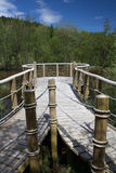 Piattaforma di osservazione del lago della foresta Immagini Stock